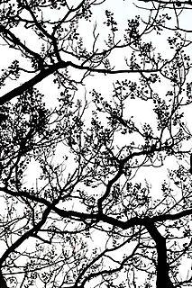 Trouver la vérité dans le chant des branches